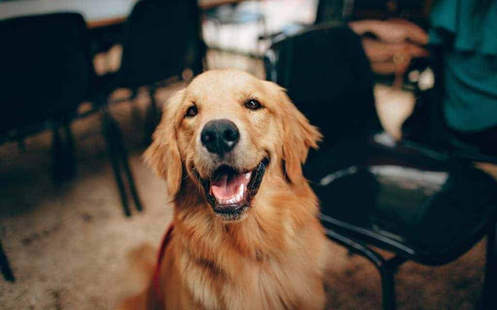4 Priceless Things We Need to Learn From Our Pet Friends